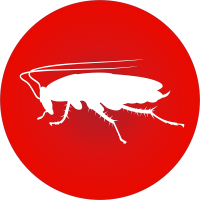 cockroaches_icon